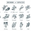 ������, ������: Herbs and spices set