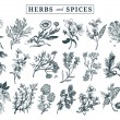 Постер, плакат: Herbs and spices set