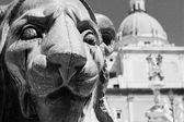 Lion in pretoria square — Zdjęcie stockowe