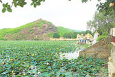 Summer floating palace on a sea of lotus flowers bundi india — Stock Photo
