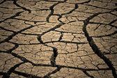 Dry weather — Stock Photo