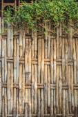 Bamboo fence — Stock Photo