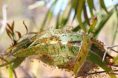 Weaver Ants — Stock Photo