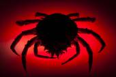 Silhouette, European spider crab, red, stealth, danger, prowling — Stock Photo