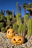 Halloween scary pumpkins on the cactuses backgroung — Stock Photo