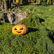 Halloween scary pumpkin in the gren grass — Stock Photo #56042243