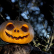 Halloween scary pumpkin in the gren tree brushwood — Stock Photo #56042399