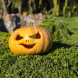 Halloween scary pumpkin in the gren grass — Stock Photo #56042547