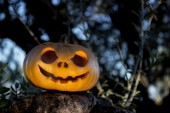 Halloween scary pumpkin in the gren tree brushwood — Stock fotografie