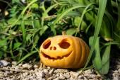 Halloween scary pumpkin in the gren grass brushwood — Stock Photo