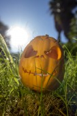 Halloween scary pumpkin in the gren grass — Stock Photo