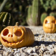 Halloween scary pumpkins on the cactuses backgroung — Stock Photo #56067509