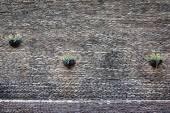Pot çiçek yüzeyle taş duvar — Stok fotoğraf