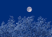 Moon over the trees — Stock Photo