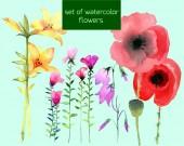 Wildflowers — Stock Vector