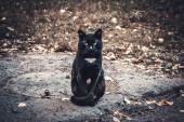 Ernstige zwarte kat — Stockfoto