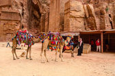 Jordan, Petra. Souvenir trade, camel riding — Stock Photo