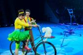 Tours of the Moscow Circus on Ice. Trained dogs — Stock Photo