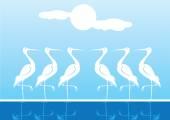 Tek bacak ayakta beyaz su kuşları — Stok Vektör
