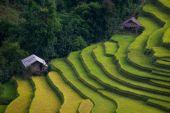 Risfälten på radhus på mu cang chai, yen bai, vietnam. — Stockfoto