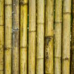 Bamboo fence — Stock Photo #61683401