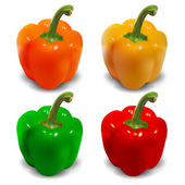 Bell pepper vector - orange, yellow, green, red — Stock Vector