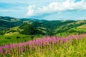 Landscape in the Carpathians with fireweed — Stock Photo