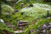 Stony stairs in the green garden — Stock Photo
