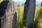Old abandoned Jewish cemetery in the Ukrainian Carpathians — Stock Photo