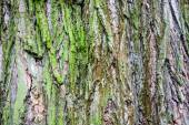 Close up of the tree bark with green moss — Stock Photo