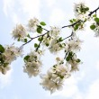 Blooming branch of the apple tree against the blue sky — Stock Photo #62742175