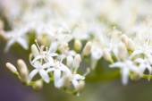 Close up of the dogwood white flowers — Stock Photo