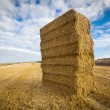 Straw bales stacked in field at harvest time, Yorkshire — Stock Photo #55286243