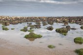 Mossy rocks and and reflections at Cayton Bay — Stock Photo