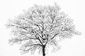 Frozen snowy trees and branches in freezing winter landscape — Stock Photo