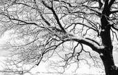 Frozen snowy trees and branches in freezing winter landscape — Foto de Stock