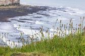 Grassy outcrop at Flamborough Head — Stock Photo