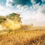 Harvester cropping grain — Stock Photo #79032694