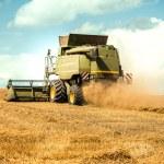 Harvester cropping grain — Stock Photo #79032300