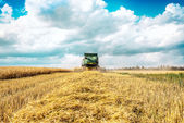 Harvester cropping grain — Stock Photo