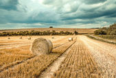 Bales of straw on cropped field — Stock Photo