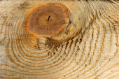 Sawn wood texture — Stock Photo