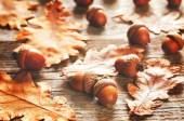 Acorns with leaves — Stock Photo