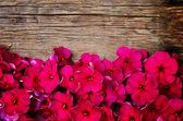 Flores rojas — Foto de Stock