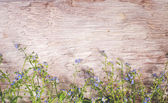 Vilda blommor — Stockfoto