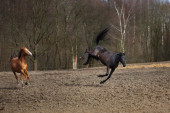 Games of horses — Stock Photo