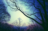 Silhouette of tree branches on blue sky. vintage style process. — Stok fotoğraf