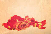 Withered roses and petals over vintage grungy background, with s — Stockfoto
