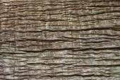 Close up of tree bark texture for background. — Foto Stock