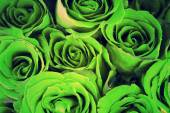 Green roses background, vintage style process. — Stock Photo